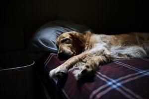 Canine Influenza: 3 Things All Dog Owners Should Know
