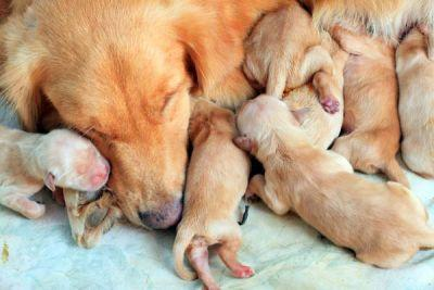 How Long Are Dogs Pregnant? Everything to Know About Dog Pregnancy