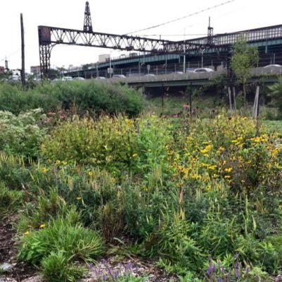 The Bronx City Park is Making Public Land Forage-Friendly