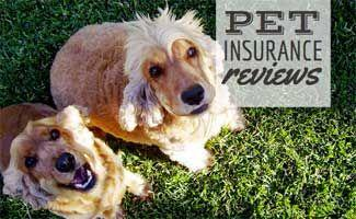 Pet Insurance Reviews 2017