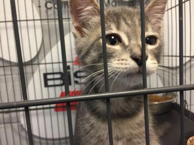 Photos: Clear the Shelters 2017