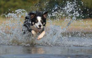 5 Safety Tips For Exercising With Your Dog