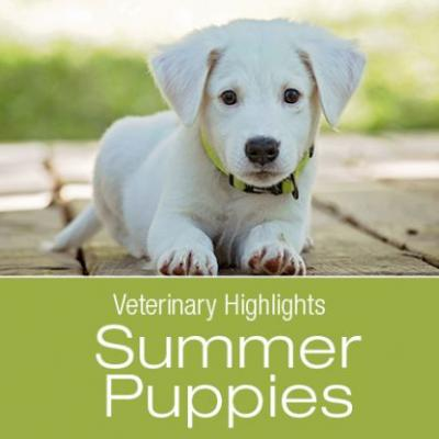 Veterinary Highlights: Summer Puppies and Heart Disease