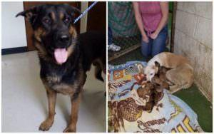 Stray Dog Leads Rescuers To The Mama & Their Puppies