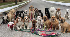 """New York Dog Walkers Take Brilliant """"Pack"""" Photographs Everyday"""