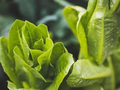 Once again we're told to avoid romaine lettuce, due to E.coli