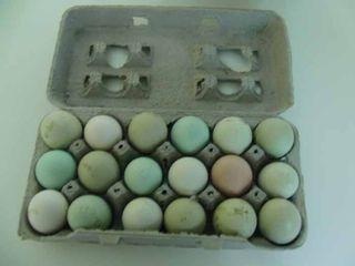 How to Make Hard Boiled Eggs in a Halogen Light Heated Oven