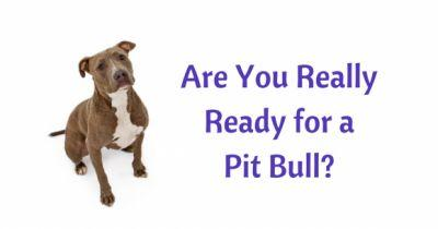 Are You Really Ready for a Pit Bull?