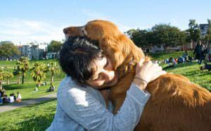 6 Signs You Seriously Love & Understand Dogs