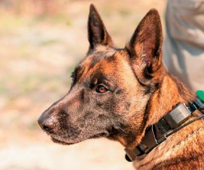African Poachers vs. Singita Grumeti's Canine Unit