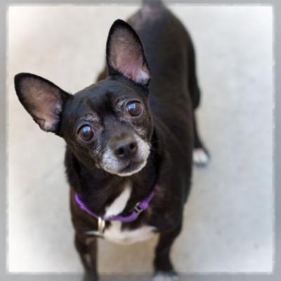 """TEDDY"" little Chi mix"