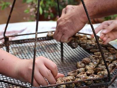 Preserving Southern France's Flame-Grilled Snail Tradition