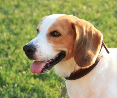 Ask the Vet: Dog Ear Infections