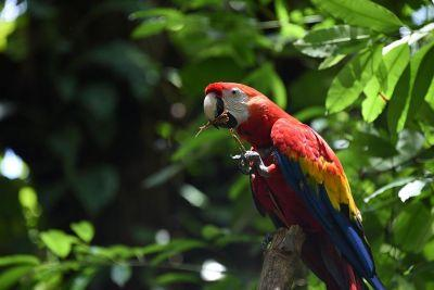 Is this the best work experience in the world? This charity is looking for someone to move to Costa Rica and become a 'Parrot Ambassador'
