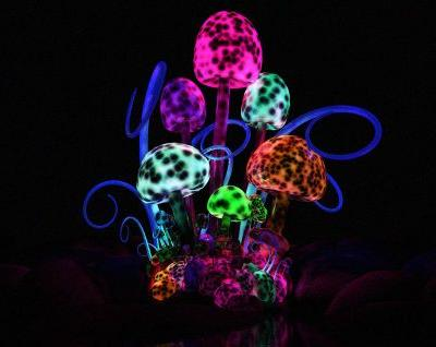 Magic Mushrooms Could Literally Reboot Your Brain
