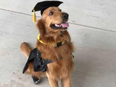 Beloved service dog, wearing custom-made cap and gown, graduates college with owner