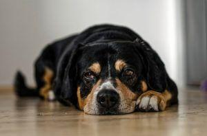 5 Signs Your Dog Is Lonely