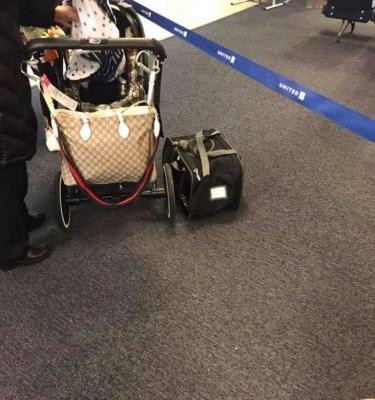 Puppy dies on United flight out of Houston after carrier put in overhead compartment