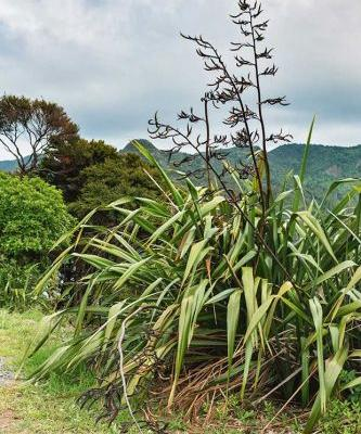 4 native trees to use for fodder in New Zealand