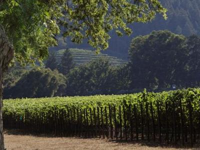 Turf Wars and Top Wines: Your Guide to To-Kalon, Napa's Most Iconic Vineyard