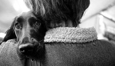 Dog Love: 13 Cutest Photos That Prove Dogs Are The Best