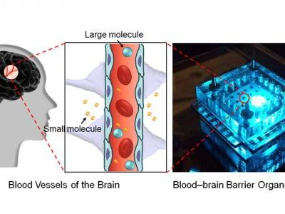 A Three-Dimensional Arrayed Microfluidic Blood-Brain Barrier Model With Integrated Electrical Sensor Array