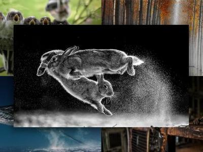 Photo of Leaping Rabbits Takes Home Top Prize at Nature Photographer of the Year 2019