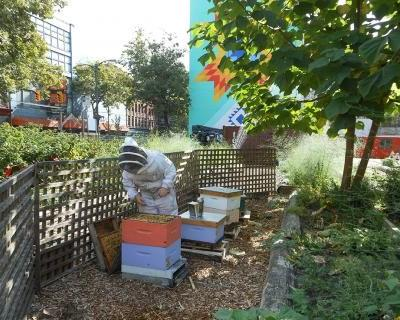 How honeybees can help track pollution in cities