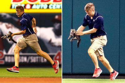Cat hailed as Cardinals hero, but not by this guy