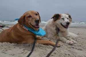 11 Tips to Make Your Dog's First Vacation a Success!