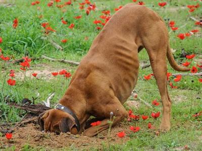 How To Teach Your Dog Not To Dig In Your Backyard