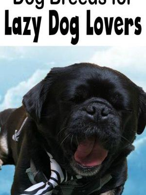 15 Best Dog Breeds for Lazy Dog Owners