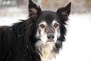 Why Your Pup May Seem Lethargic In Winter And What You Can Do
