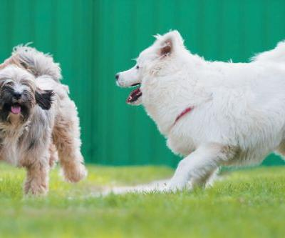 How to Socialize a Dog Through Dog Training Classes & More