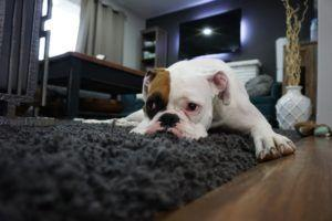 6 Critical Behavior Changes To Watch Out For In Your Dog