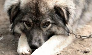 New State Law Cracks Down On Dog Tethering