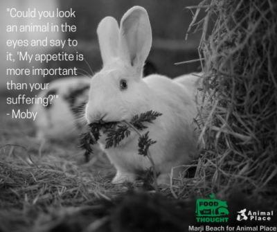 Animals' lives are worth more than just a meal!