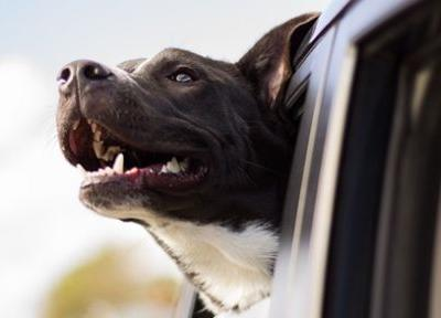 Pet Travel: 6 Ways to Deal with an Anxious Dog