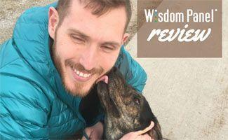 Wisdom Panel Review: Our Dog's Results Were Surprising