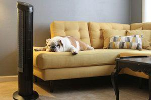 3 Signs Your Bulldog Is Overweight