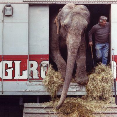 Akron played a role in one of the darkest days in the history of the Ringling Bros. and Barnum & Bailey Circus