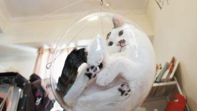 Someone's made a magical bubble bowl chair for cats