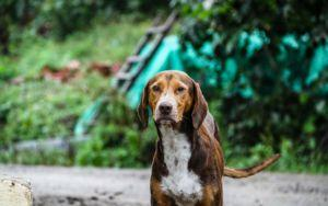 What To Do When You Find A Stray Dog