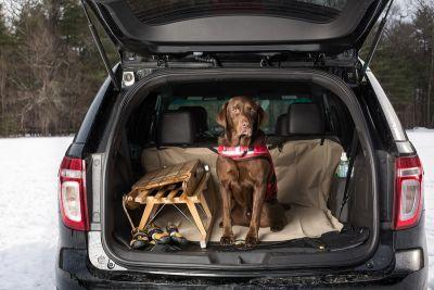 Essential Gear for Traveling with Your Pup this Winter