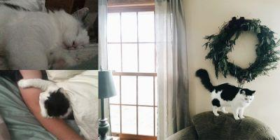 We think Kaydence is the perfect cat for us and we know