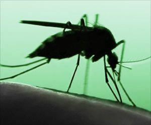 Eliminating Malaria-Carrying Mosquitoes Does Not Affect Ecosystem