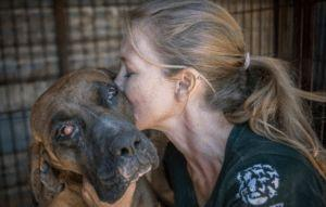 Over 130 Dogs Saved From Korean Dog Meat Farm