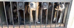 Dog Meat Sales BANNED Just Before Yulin Festival In China