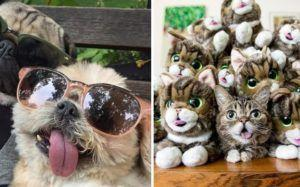 The 10 Most Famous Instagram Pets Of 2017