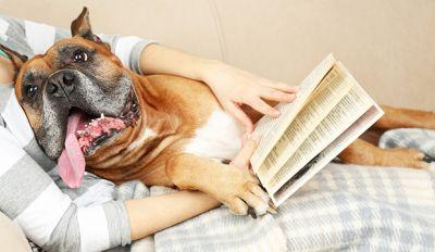 Our Pick: 5 Best Dog Training Books On Amazon